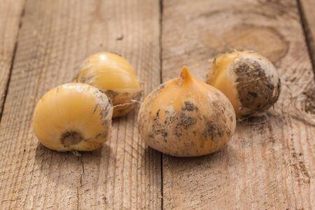 Allium hollandicum, common names Persian onion  or Dutch garlic bulbs on table. Imagens