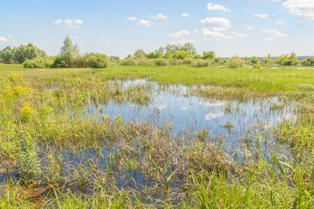 Flood meadow of the valley of a small river in Polesie spring sunny day.