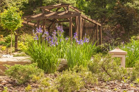 Stylized Japanese garden with blooming Siberian irises and oriental lantern on the background of the tea pavilion in spring 版權商用圖片