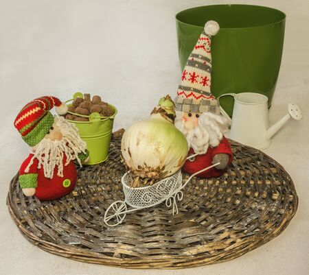 Two toy gnomes (mass-produced) and a hippeastrum bulb (amaryllis) on a wheelbarrow. Concept Stockfoto