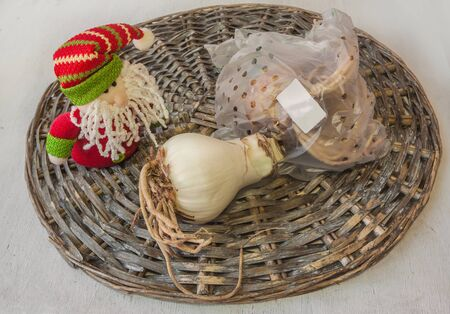 Toy gnome (mass-produced) and 2 bulbs of hippeastrum (amarilis) on a wicker circle. Concept