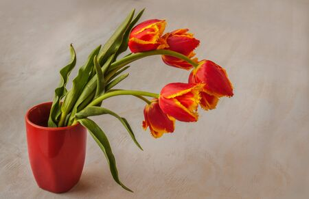 Red fringed tulips in a red vase on a gray background Banco de Imagens - 145291734