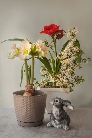 Blooming red and white hippeastrum (amaryllis) and cherry branches next to the rabbit figure (mass production) on a gray background. Spring concept
