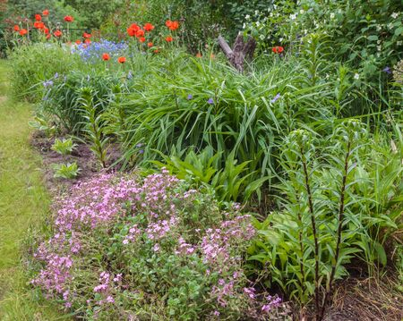 Irregular flowerbed from host, tradescantia, lily, Saponaria, oriental poppies in the garden in early summer
