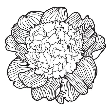 Bosquejo Flower.Vector Traza Decorativa Del Iris Flowers.Template ...