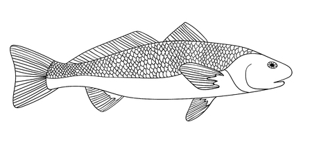 sturgeon: Detailed ornamental sketch of a fish, Hand drawn zentangle for adult anti stress. Coloring page with high details isolated on white background. Zentangle pattern for relax and meditation. Illustration