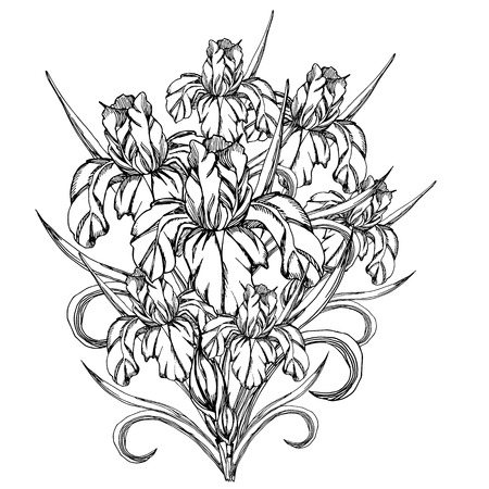 Sketch black and white flowerctor decorative flowerstemplate sketch flowerctor decorative trace of iris flowerstemplate for coloring pages for adults pronofoot35fo Choice Image