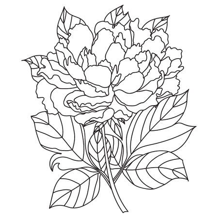 peony black: Vector Peony Coloring book page for adults. Hand drawn artwork. Love bohemia concept for wedding invitation, card, ticket, branding, logo, label. Gift for girl, women. Black and white.
