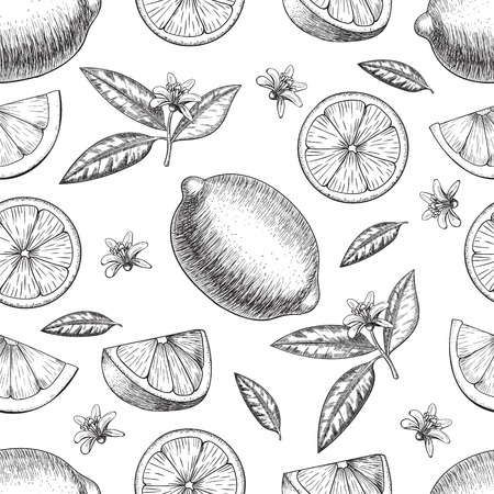 Seamless  lime or lemon. Whole lemon, sliced pieces half, leave sketch. Fruit engraved style illustration. Retro illustration. Detailed citrus drawing. Great for water, detox drink, natural cosmetics 矢量图像