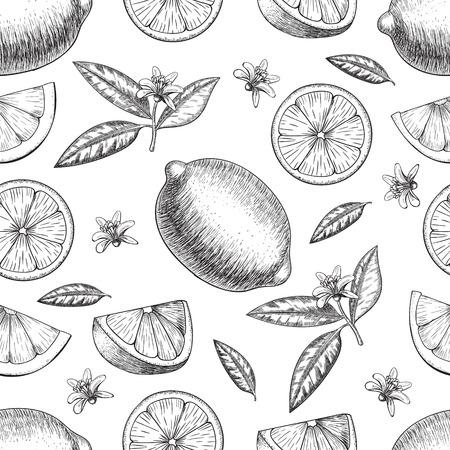 Seamless  lime or lemon. Whole lemon, sliced pieces half, leave sketch. Fruit engraved style illustration. Retro illustration. Detailed citrus drawing. Great for water, detox drink, natural cosmetics Illusztráció