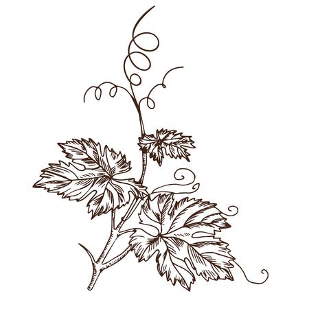 Druivenbladeren in de stijl van een schets Stock Illustratie