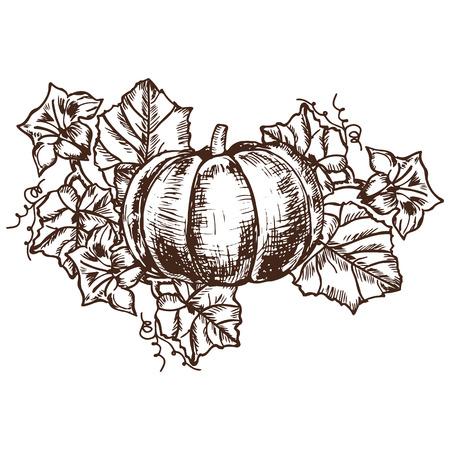 autumn harvest: sketch pumpkin leaves, flowers. detailed autumn harvest halloween illustration Illustration