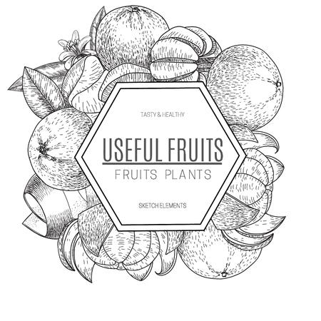 mandarins: Vector design of hand drawn mandarins. Vintage sketch style illustration. Organic eco food. Whole , sliced pieces half,leaves and flowers leave . Fruit engraved .