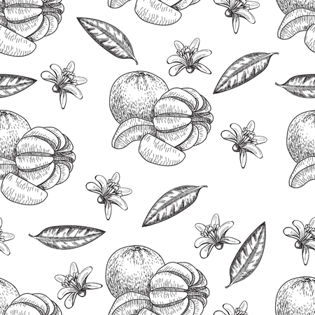 mandarins: Hand made vector sketch of mandarins in vintage style. Illustration