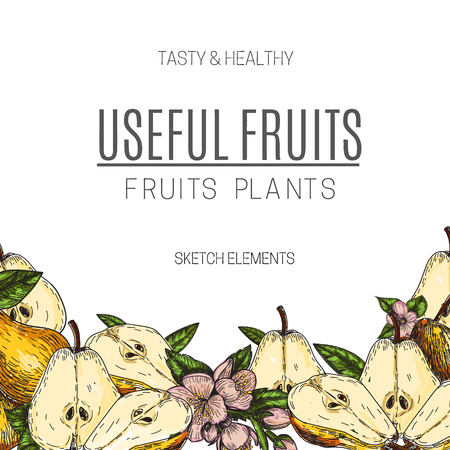 vintage: Vector design of hand drawn pear. Vintage sketch style illustration. Organic eco food. Whole , sliced pieces half,leaves and flowers leave sketch. Fruit engraved style illustration.