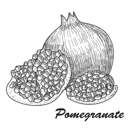 Pomegranate fruit, berry. Organic nutrition healthy food. Engraved hand drawn vintage retro vector Isolated on white background