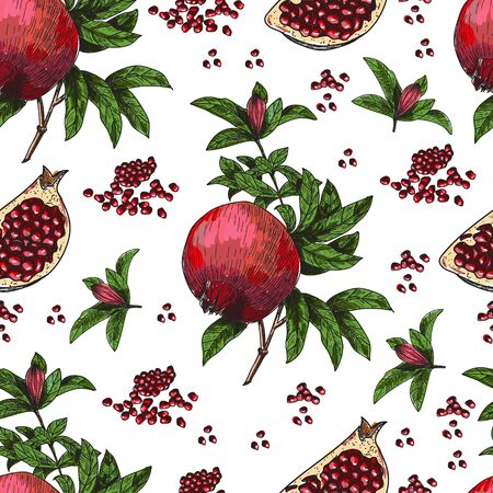 Seamless pattern Hand drawn sketch style pomegranates with seeds and leafs. Sketch style vector illustration. Organic food vector