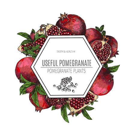 Vector design of hand drawn pomegranate. Vintage sketch style illustration. Organic eco food. Whole , sliced pieces half,leaves and flowers leave . Fruit engraved . Illustration