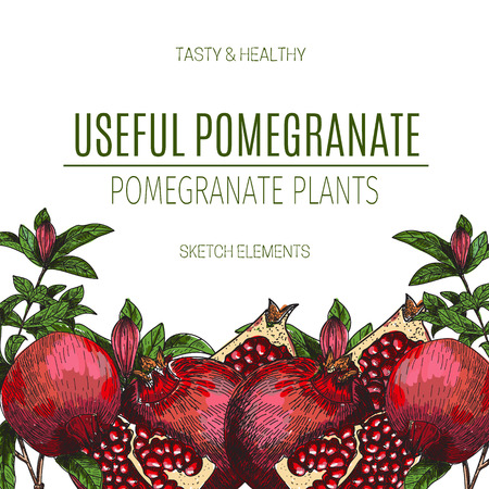 Vector design of hand drawn pomegranate. Vintage sketch style illustration. Organic eco food. Whole , sliced pieces half,leaves and flowers leave . Fruit engraved . Çizim