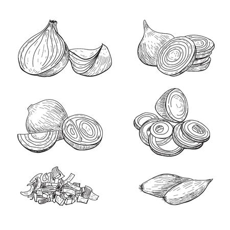 Conjunto de vector dibujado mano de la cebolla. Completo, anillos y rebanada de recorte medio. Aislado Objeto de estilo grabado vegetal. Dibujo detallado de comida vegetariana. Producto del mercado agrícola. Ideal para menú, etiqueta, icono