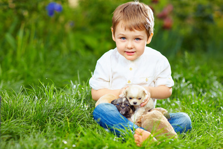 cute kid with small puppies sitting on the grass photo
