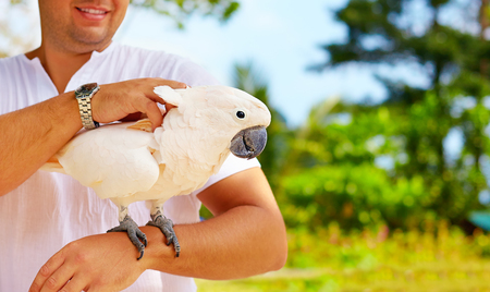cockatoo: This is Molly. She likes massage. Cockatoo parrot