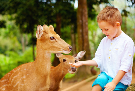 cute boy feeding young deers from hands