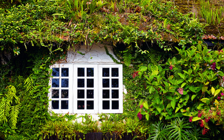 old english: old house overgrown with beautiful plants and flowers in Cameron Highlands, Malaysia Stock Photo