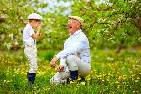 grandfather: Abuelo felices con nieto soplando dientes de le�n en el jard�n de primavera
