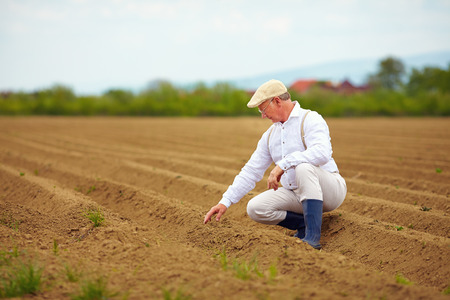 crecimiento planta: maduro hombre agricultor en el campo de labor comprobando el crecimiento de las plantas Foto de archivo
