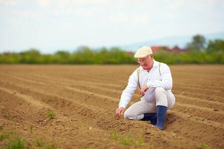 pflanze wachstum: reifer Mann Landwirt auf dem Ackerfeld �berpr�fung des Pflanzenwachstums