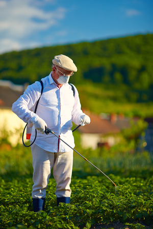 potato plant: man in protective clothes spraying insecticide on potatoes
