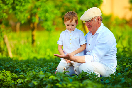 experienced grandfather teaching curious grandson potato rows
