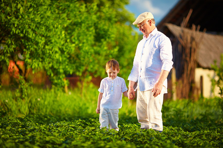 homestead: grandfather and grandson together on their homestead among potatoes rows