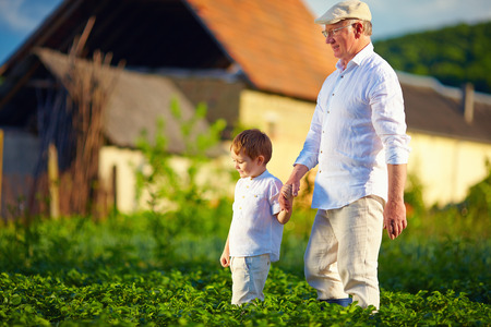 grandfather and grandson together on their homestead among potatoes rows photo