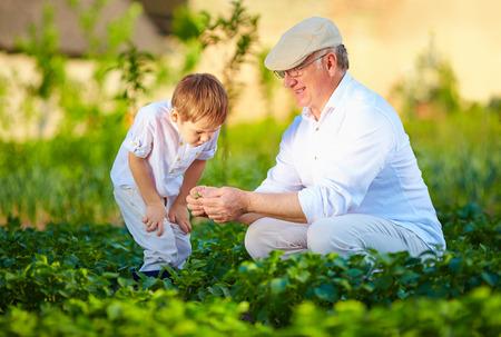 pflanze wachstum: Gro�vater erkl�rt Enkel die Art des Pflanzenwachstums Lizenzfreie Bilder
