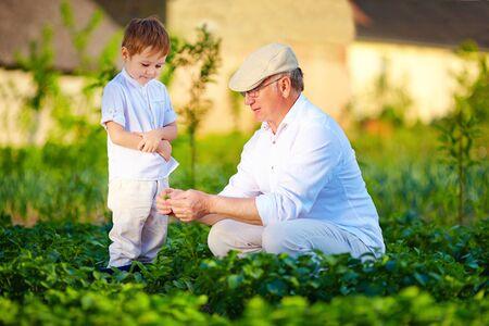 crecimiento planta: Abuelo explica el nieto la naturaleza del crecimiento de las plantas