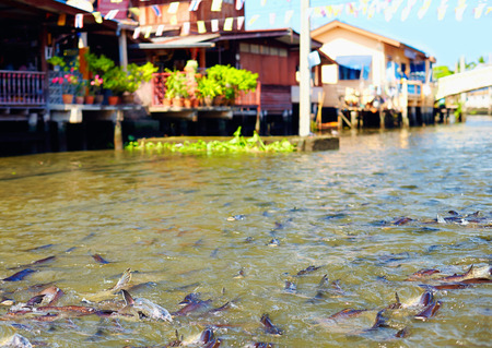 house float on water: huge quantity of fish in river canal of Bangkok Thailand Stock Photo