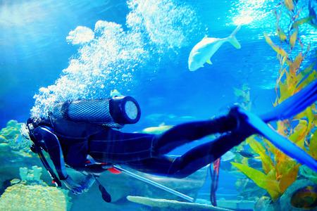 スクーバダイバー泳ぐ水中サンゴ礁の間で
