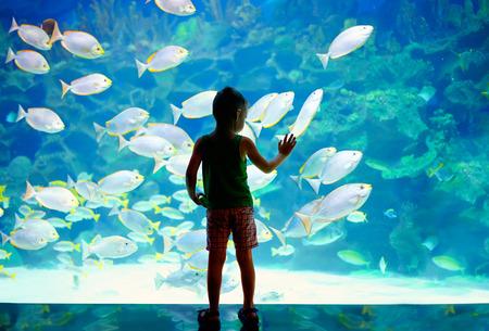 小さな男の子が、水族館で泳いでいる魚の群れを見ている子供
