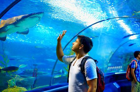 tunel: turista curioso mirando con interés de tiburón en túnel oceanario Foto de archivo