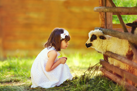 the lamb: cute girl kid feeding lamb with grass countryside