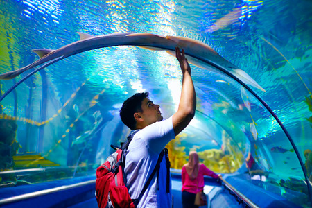 public aquarium: young man tourist touching the glass under crampfish while visiting marine underwater tunnel