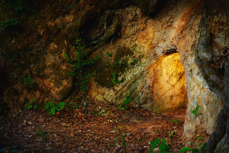deep roots: secret stone cave in dark forest