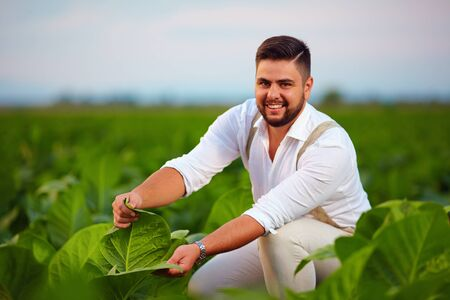 field crop: young adult plantation owner checks tobacco leaves on farmland