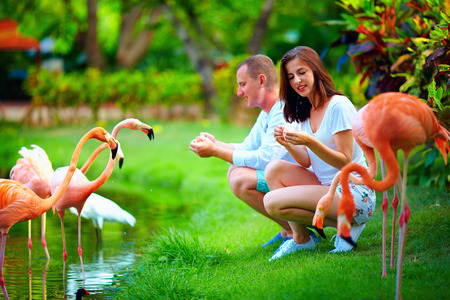 zoo youth: young couple feeding flamingo birds with hands on pond
