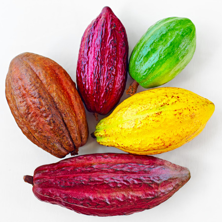 different sorts of colorful cocoa pods on white Stock Photo