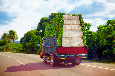 a truck carrying a load of bananas, driving through Dominican Republic road Foto de archivo