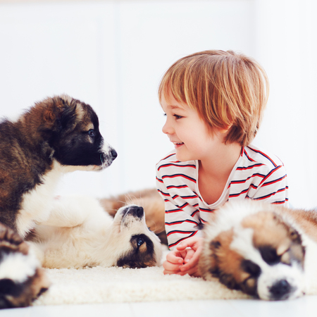 happy kid playing with cute puppies at home