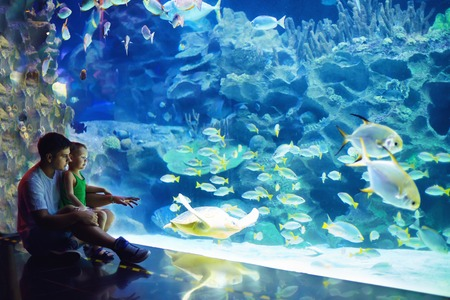 excited father and son watching the marine life in oceanarium